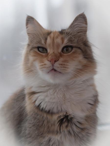 Cat** by Alex_r