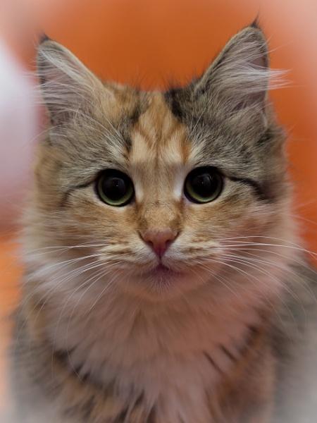 Cat*** by Alex_r
