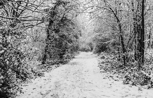 A Path Through Winter by martin.w