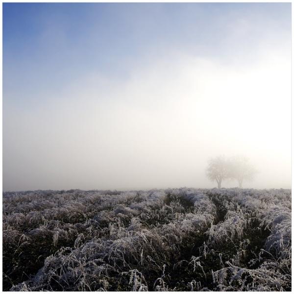 bon hiver V/ by bliba