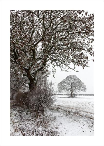Combs Lane Snow (2) by Steve-T