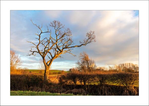 Edingley Beck (2) by Steve-T