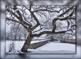 Snowtographs