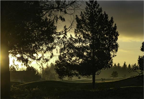 Rising Sun by Daisymaye