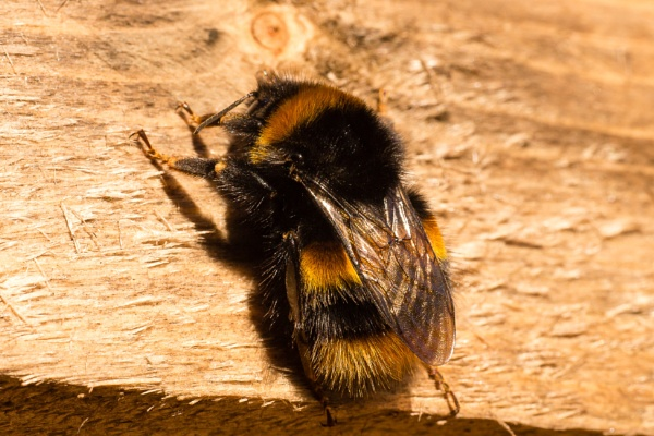 Sun Bee-ving today. by JackAllTog