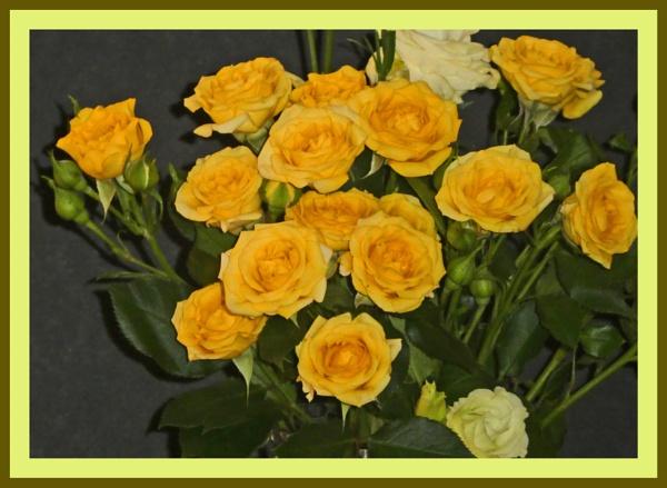 ROSES by EMJAYCEE