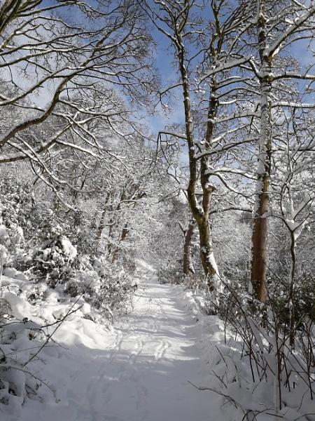 Winter Walk by Cowser