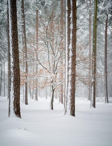 Winter tree by soulsharer
