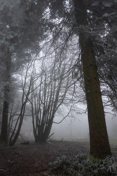 Winter Woodland by RolandC