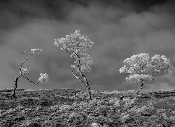 Hoar Frost 2 by mbradley
