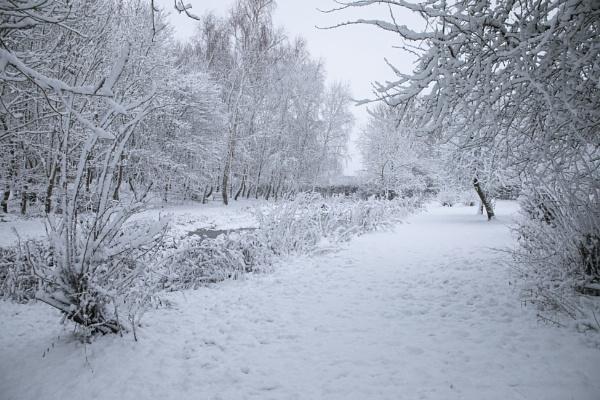 The Scrape in the Snow by tralfamadorean