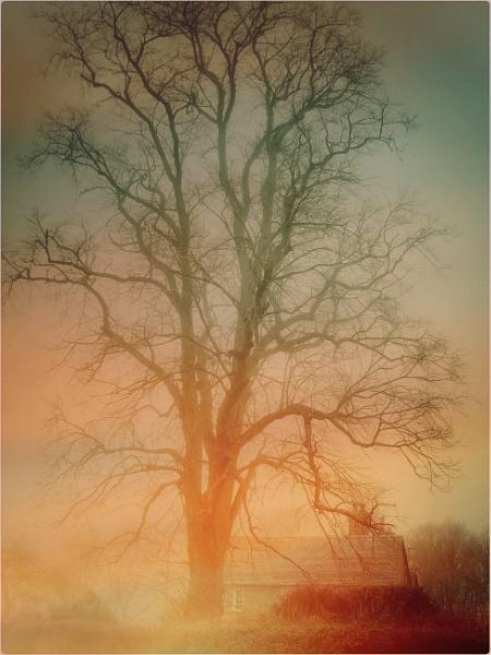 Winter Mist by exposure
