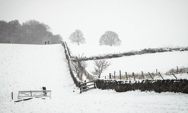 Field View by Trevhas
