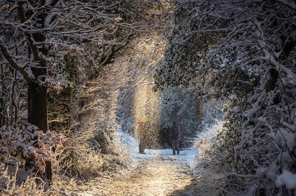 Snow Shower by Trevhas