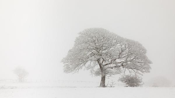 The Oak Tree by Philpot