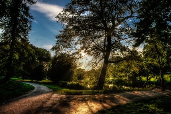 Gosh Which Path Should I take by woodini254