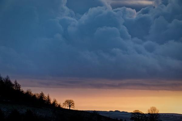 Tree against storm by Malfun