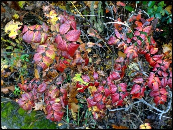 rosebush by FabioKeiner