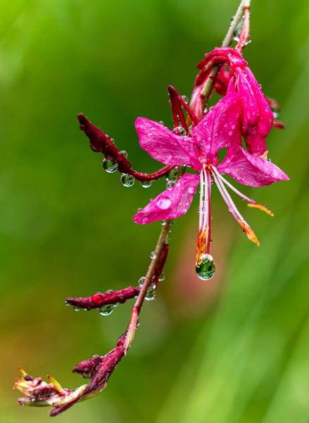 Summer Rain by BobinAus