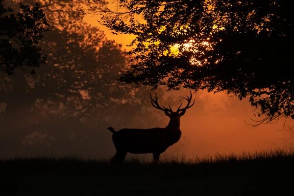 Red Deer at sunrise by StuartAt