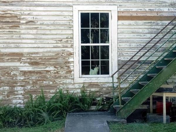 Cat in he Window by Nesto