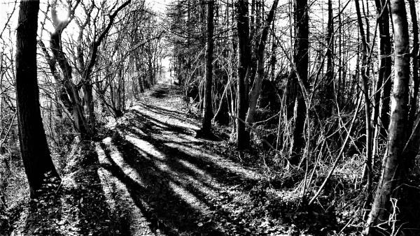 Shadow and Light by NorthernWayfarer