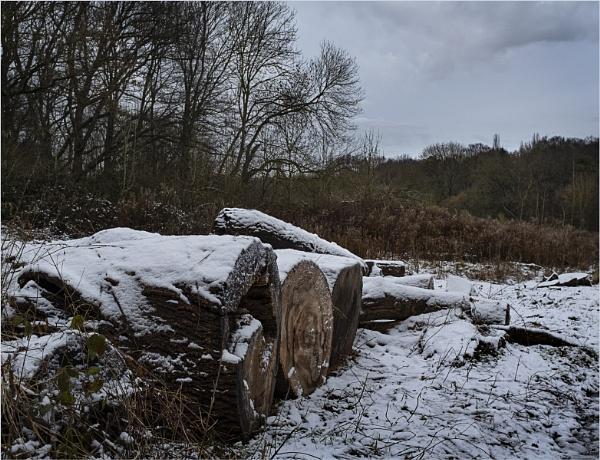 Winter Logs by AlfieK