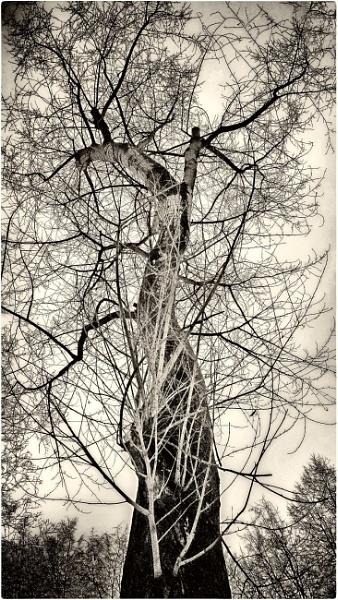 winter tree by leo_nid