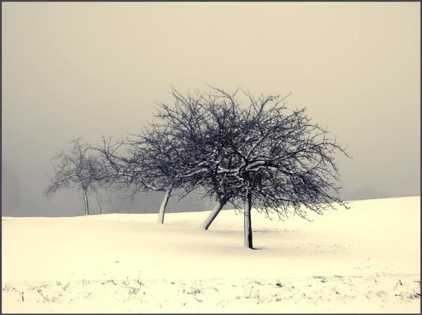 Winterland by kw