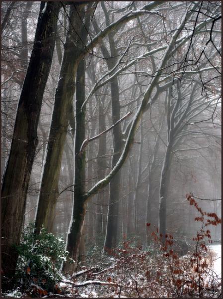 Misty Winter Day by kw