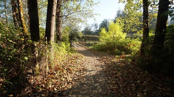 Morning walk by MentorRon