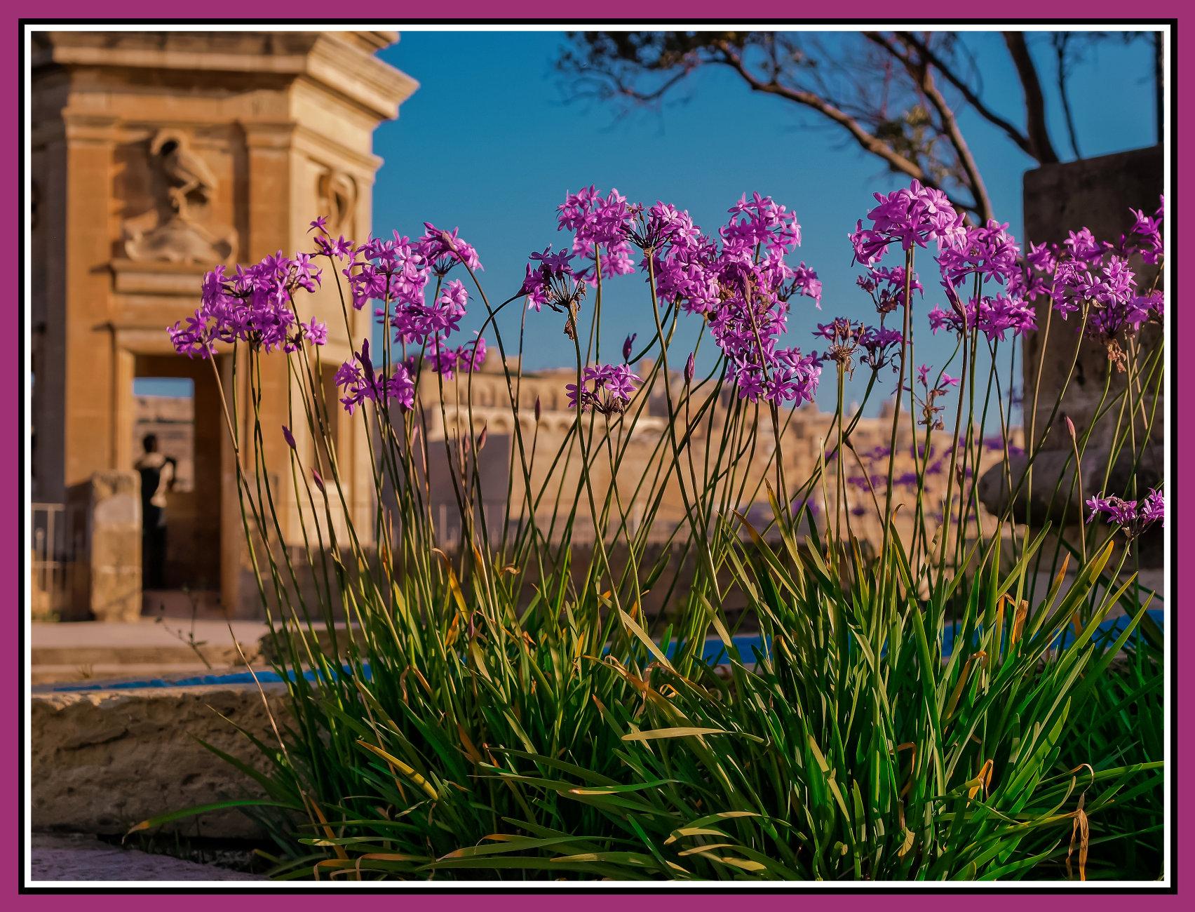 VALENTINE's DAWN ------ SENGLEA (ISLA in Maltese)
