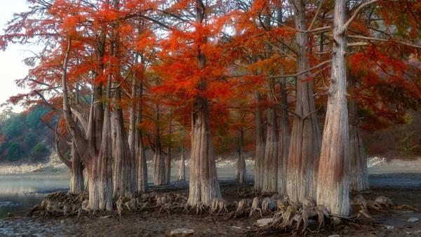 Swamp cypresses by Aleksandr_Plekhanov