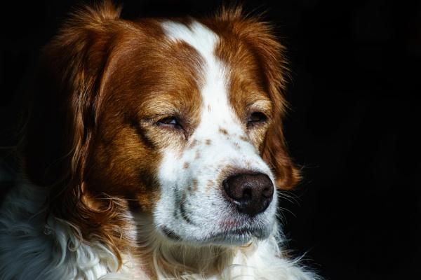 Portrait of a Dog by Silverlake