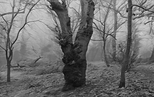 Lassington Woods by BobEH