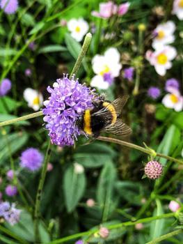 Bee happy