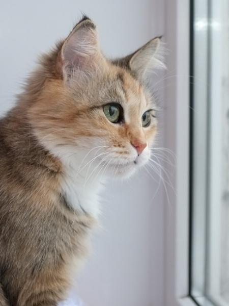 Cat**** by Alex_r