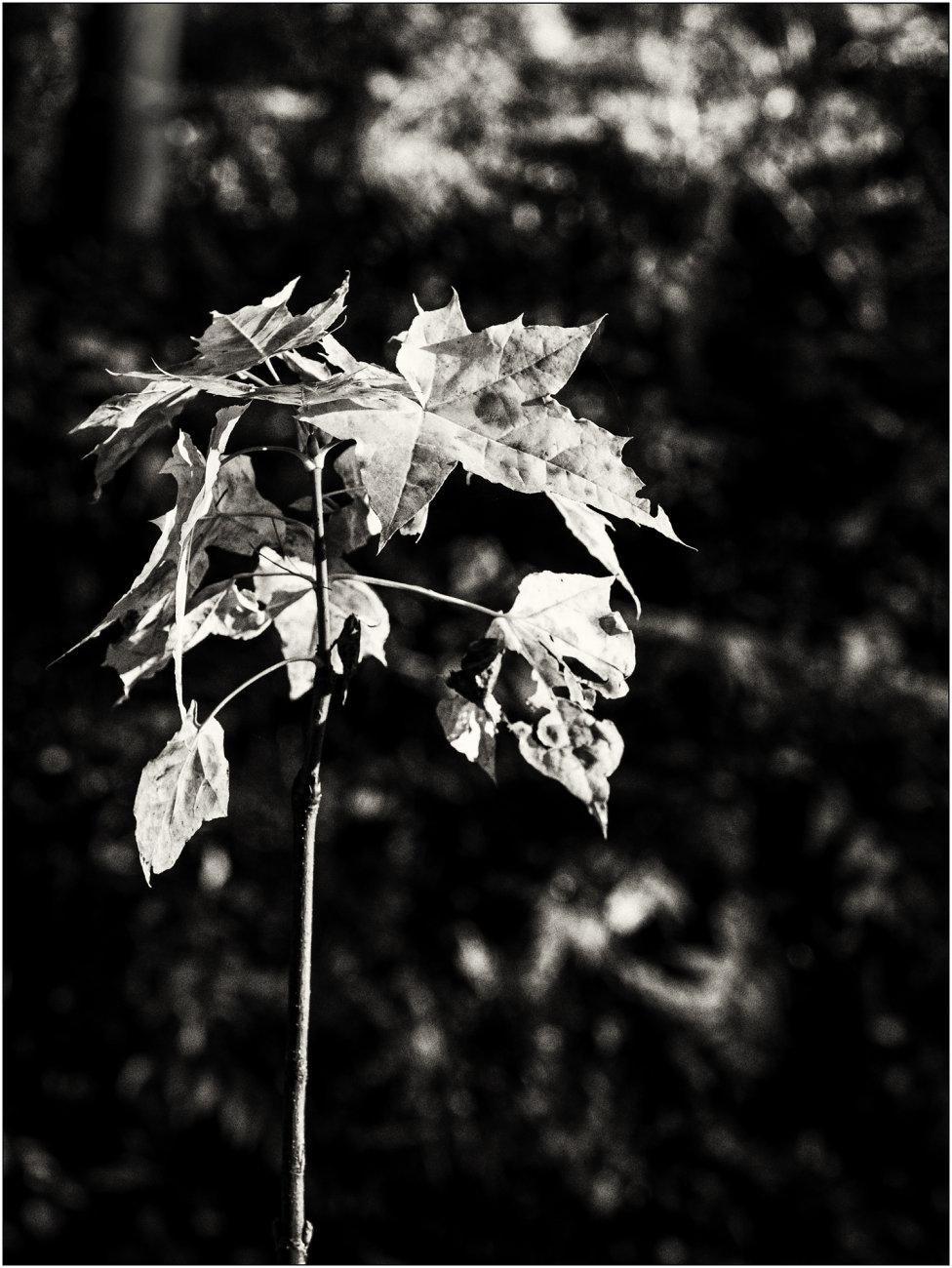 Autumn : Dull Days 1