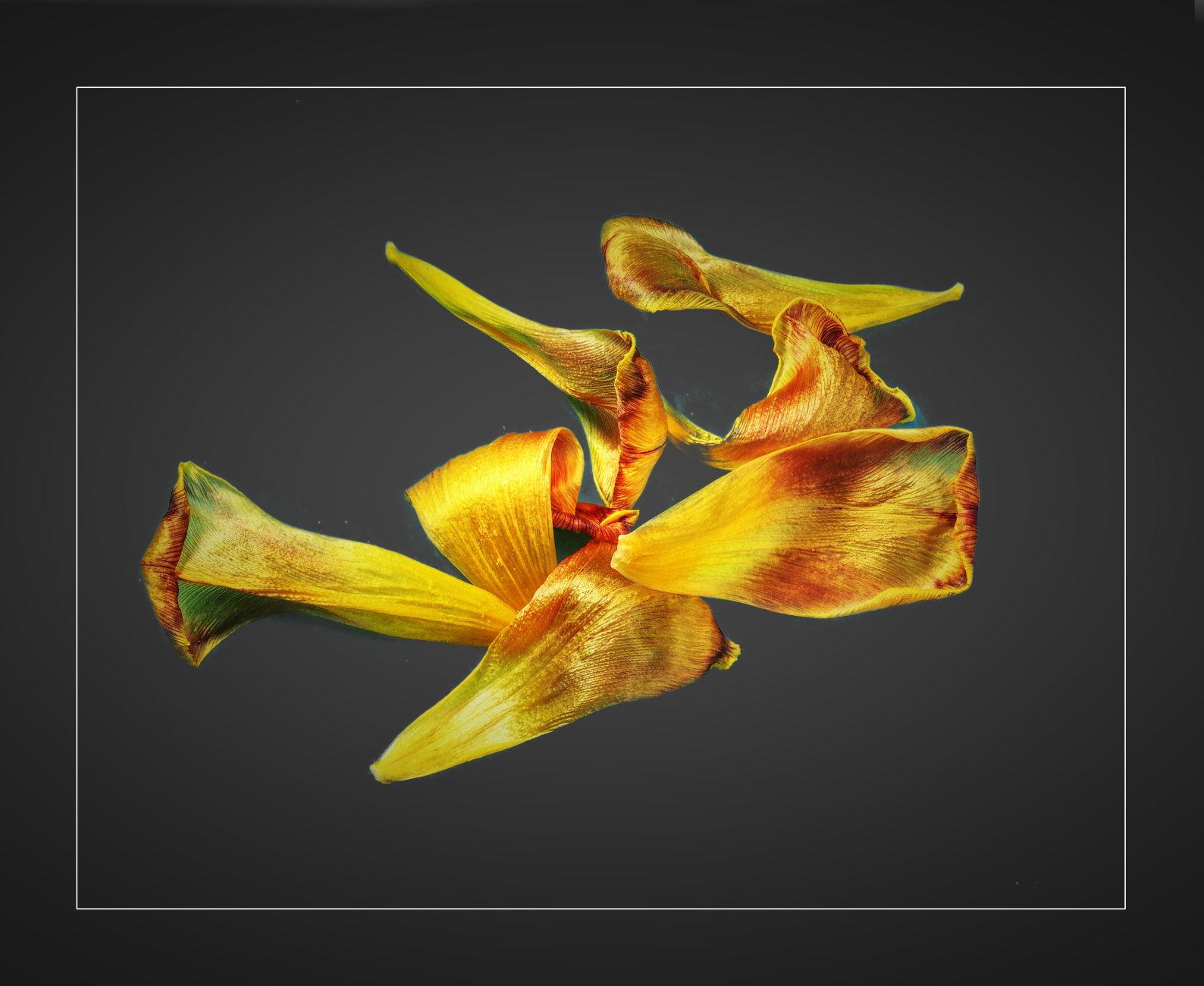 Tulip Leaves