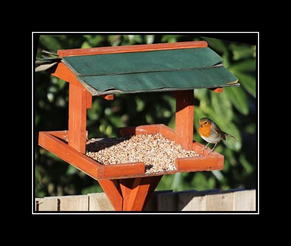 Mr Robin by r0nn1e