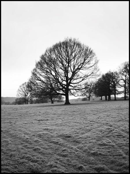 Winter Tree  by NikitaMorris