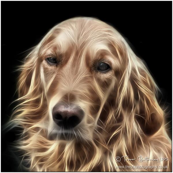 A Shaggy Dog Story! by TrevBatWCC