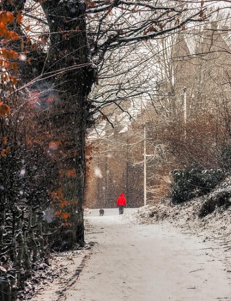 Snowy Scene by scrimmy