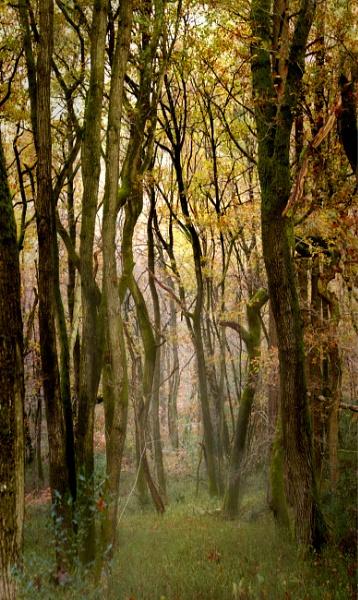 Golden Valley Last Autumn by Shamley