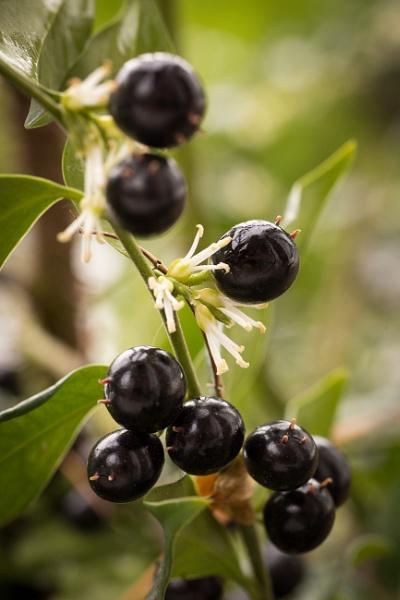 Winter Box, Berries and flowers by JackAllTog