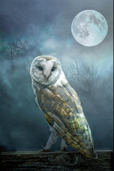 Barn Owl Moon by Tarrby