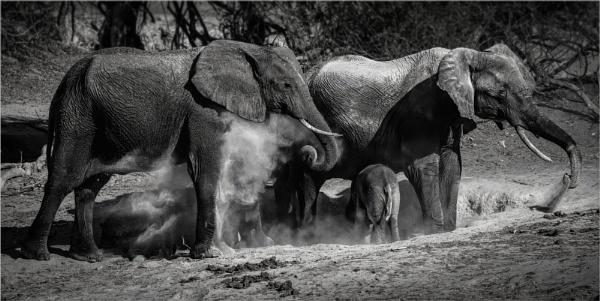Dust Bathing by mjparmy