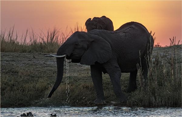 Last light at Chobe by mjparmy