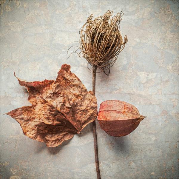 Colours of Autumn by Dixxipix