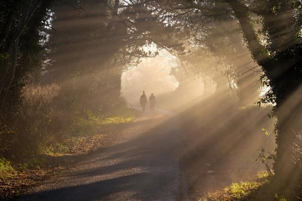 December Walk by SamCampbell